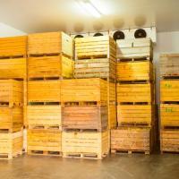 Холодильне плодосховище для зберігання фруктів Ужгород